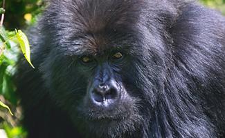 7 Days Uganda Primates Safari
